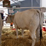 carne calvana